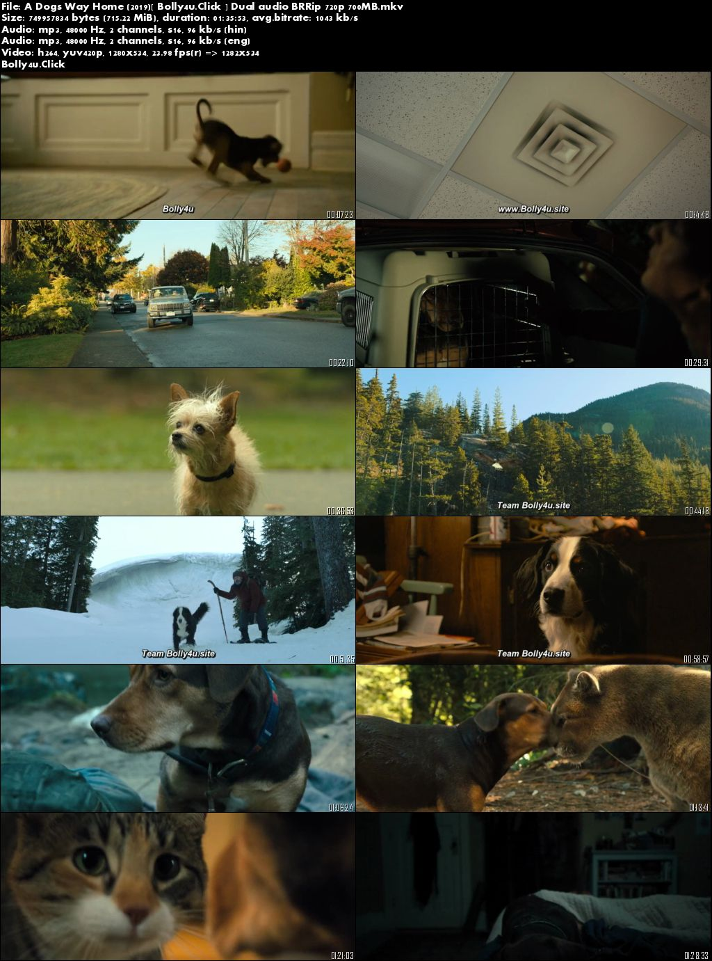 A Dogs Way Home 2019 BRRip 700Mb Hindi Dual Audio 720p Download